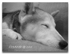 0607champ_1