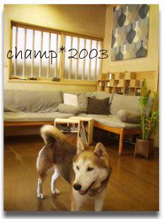 2003champ