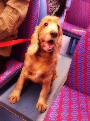 Traindog_2