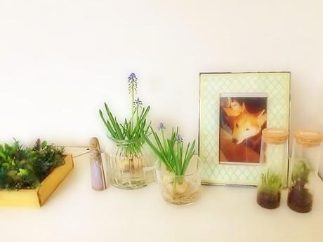 Botanical5