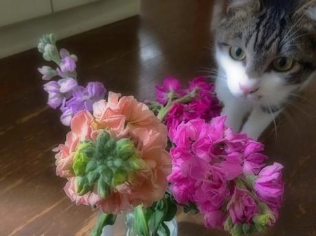 Flowerchamp